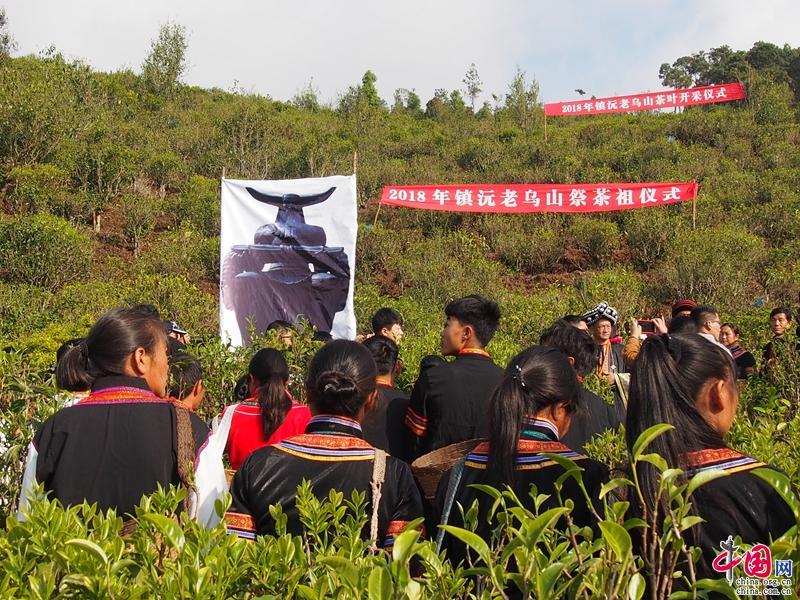 4月8日,云南省普洱市镇沅县按板镇举行老乌山茶祭祖暨茶叶开采仪式,这