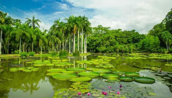 植物园:(1)云南籍旅游者提前转发旅游日植物园相关活动链接5次,并获点赞59次,活动期间享受门票买一免一优惠(买一张全价门票同行一人免票)。(2)版纳、思茅籍旅游者提前转发旅游日植物园相关活动链接5次,并获点赞59次,活动期间享受亲子出游,同行孩子免门票优惠。(3)云南籍旅游者亲子出游,游客携带一名孩子(18岁以下,凭身份证),游客可领取纪念礼包一份,领取地址:游客服务中心。电话:0691-8715914。(4)活动期间,特别推出萤火虫季夜游科普活动(须提前一天电话预约)萤火虫与星空的夏夜在等你(40元