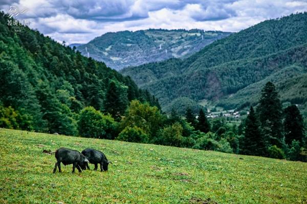 富和山原始森林波澜壮阔,金鸡寺奇险神韵,大羊场婀娜柔美,罗古菁鬼斧