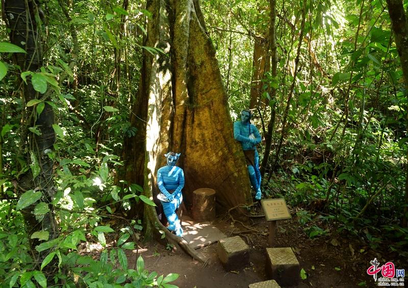 暑假旅游去哪里?来西双版纳望天树 雨林之行活动丰优惠多图片