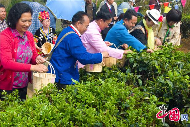 梁河回龙茶开采 共创民族团结旅游经济大发展