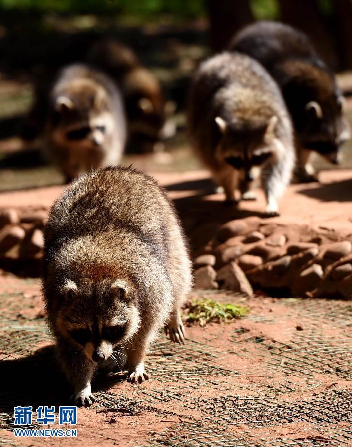 云南野生动物园里阳光下的动物_ 联盟中国 _ 中国网