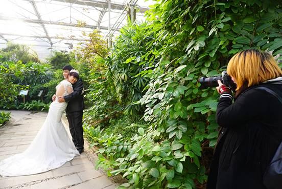 金丰农科园中的热带植物园成为了婚纱摄影外景地.摄影:陈勇