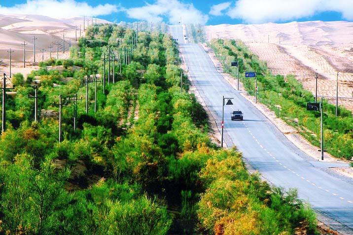 塔里木沙漠公路防护林图片