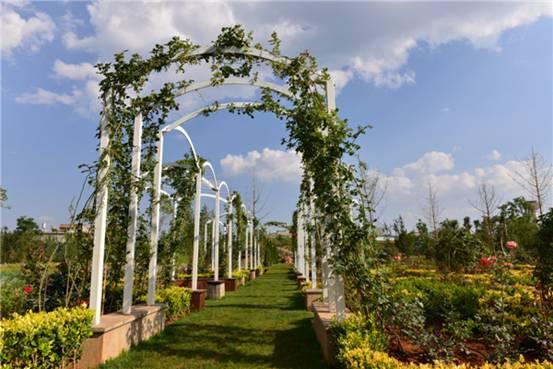 通过景观苗木,蓝莓等种植与蔬菜种植对比发现,景观苗木较蔬菜减肥100%