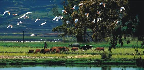 人与自然和谐相处