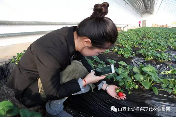 振興的草莓熟了,你還在等什麼?