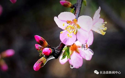 花的剪法步骤图解